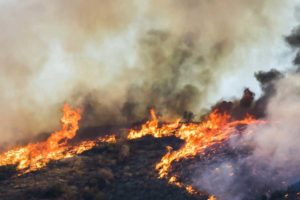 california wildfire employment lawyer